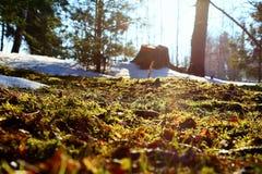Wiosna krajobraz z roztapiającym śniegiem i odtajać łaty w lasowym wiosna krajobrazie odtajamy las zdjęcie royalty free