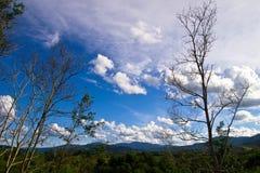 Wiosna krajobraz z zieloną trawą na łąkach i chmurami na niebieskim niebie Zdjęcia Stock