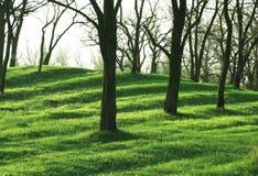 wiosna krajobrazowa Obrazy Stock