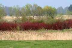 wiosna krajobrazowa Zdjęcie Stock