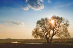 wiosna krajobrazowy zmierzch Obraz Stock