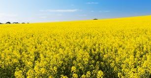 Wiosna krajobrazu kwiaty Zdjęcie Royalty Free