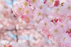 Wiosna kwiatów granica z menchii okwitnięciem Zdjęcia Royalty Free