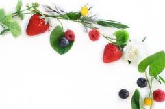 Wiosna kwiatów i owoc girlanda Fotografia Royalty Free