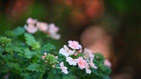 Wiosna kwiatów ogródu deszczu krople zbiory