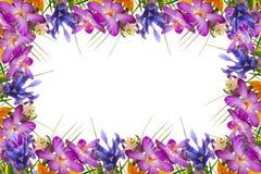 Wiosna kwiatów rama. Zdjęcie Stock