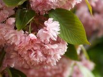 wiosna kwiat Zdjęcia Royalty Free