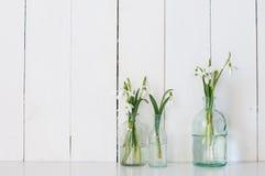 wiosna kwiat Obraz Stock