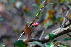 wiosna kwiat zdjęcie stock