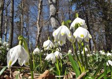wiosna kwiat zdjęcia stock