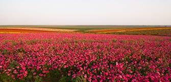 wiosna kwiat Fotografia Stock