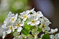 wiosna kwiat Zdjęcie Royalty Free