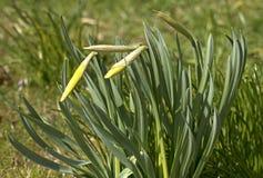 Wiosna, kwiat Zdjęcie Stock