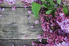 wiosna kwiat Bzów kwiatów rama na wieśniaku Textured Szarego drewnianego tło Odgórny widok, mieszkanie nieatutowy Obrazy Stock