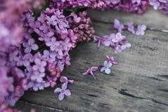 wiosna kwiat Bzów kwiatów rama na wieśniaku Textured Szarego drewnianego tło Odgórny widok, mieszkanie nieatutowy Zdjęcie Royalty Free