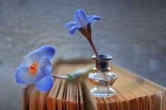 wiosna kwiat dzika Fotografia Stock