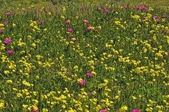 wiosna kwiat dzika zdjęcie stock