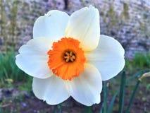 Wiosna, kwiat, jaskrawi colours i jedyność, zdjęcia royalty free