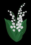 Wiosna kwiat - leluja dolina Fotografia Royalty Free