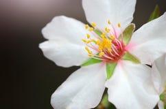 Wiosna kwiat na drzewie obraz royalty free