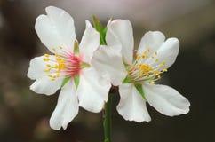 Wiosna kwiat na drzewie zdjęcia royalty free