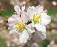 Wiosna kwiat na drzewie fotografia stock