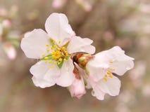 Wiosna kwiat na drzewie bell świątecznej element projektu obrazy royalty free