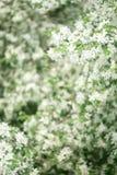wiosna kwiat ogrodu Fotografia Stock