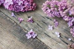 wiosna kwiat Purpurowa bzów kwiatów rama na wieśniaku Textured Szarego drewnianego tło Odgórny widok, mieszkanie nieatutowy Obrazy Stock