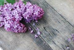 wiosna kwiat Purpurowa bzów kwiatów rama na wieśniaku Textured Szarego drewnianego tło Odgórny widok, mieszkanie nieatutowy Fotografia Royalty Free