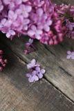 wiosna kwiat Purpurowa bzów kwiatów rama na wieśniaku Textured Szarego drewnianego tło Odgórny widok, mieszkanie nieatutowy Zdjęcia Stock