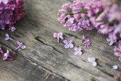 wiosna kwiat Purpurowa bzów kwiatów rama na wieśniaku Textured Szarego drewnianego tło Odgórny widok, mieszkanie nieatutowy Obraz Stock