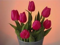 wiosna kwiat Różowi tulipany z zielonymi liśćmi na pomarańcze tle Fotografia Stock