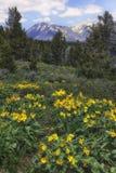 Wiosna kwiat w górach Zdjęcie Stock