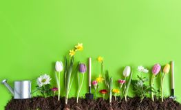 Wiosna kwiatu łóżka tło Obrazy Royalty Free