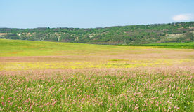 Wiosna kwiatu łąka. Obraz Stock