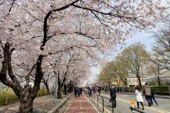 Wiosna kwiatu festiwal w Seul Fotografia Stock