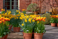 Wiosna kwiatu garnki Fotografia Stock