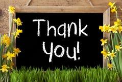 Wiosna kwiatu narcyz, Chalkboard, tekst Dziękuje Ciebie Zdjęcia Royalty Free