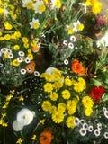 Wiosna kwiatu ogrodowy przygotowania w garnkach Zdjęcie Stock