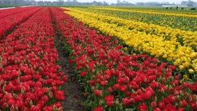 Wiosna kwiatu pole zbiory wideo