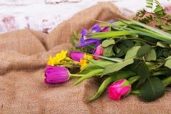 Wiosna kwiatu przygotowania przeciw nieociosanemu tłu obraz royalty free