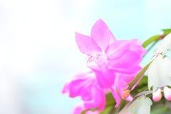 Wiosna kwiatu tło dla strona internetowa sztandaru Obrazy Stock