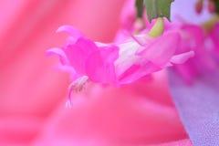 Wiosna kwiatu tło dla strona internetowa sztandaru Fotografia Stock