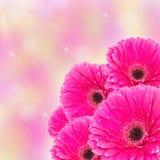 Wiosna kwiatu tło z bokeh Zdjęcia Royalty Free