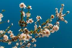 Wiosna kwiaty Fotografia Royalty Free