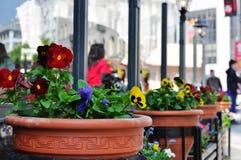 WIOSNA kwiaty Obraz Stock