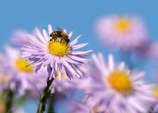 Wiosna kwiaty Zdjęcia Royalty Free