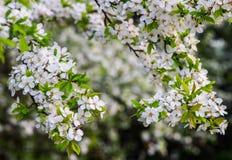 wiosna kwiaty Obrazy Royalty Free
