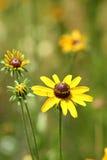 wiosna kwiaty Zdjęcie Royalty Free
